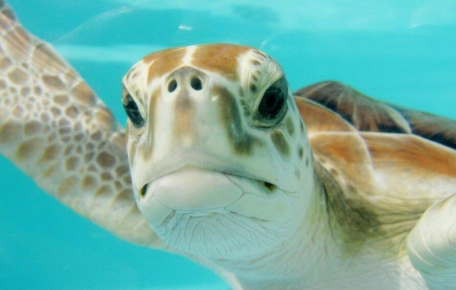 바다거북이 꿈