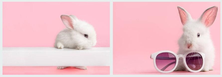 토끼 꿈해몽