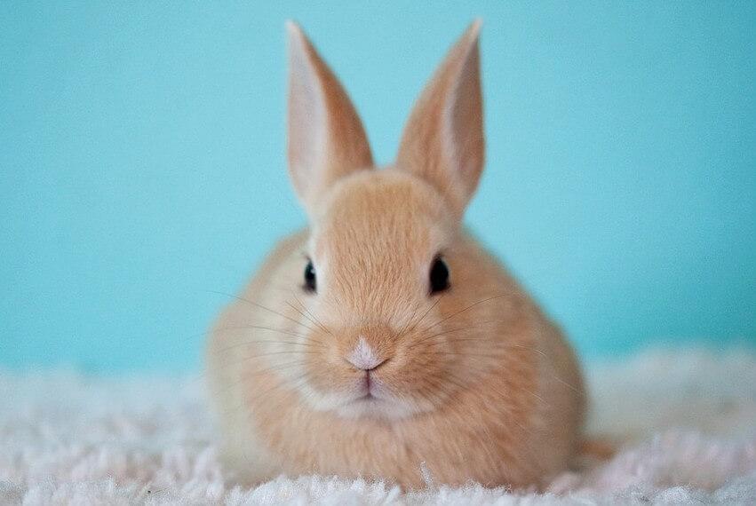 토끼 꿈 해몽